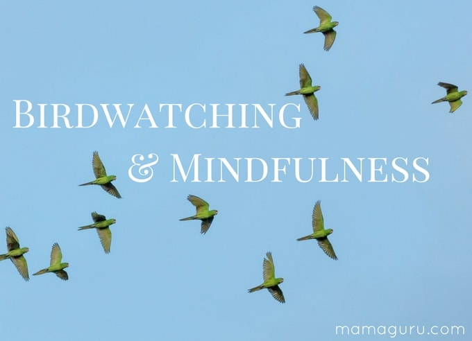 Birdwatching: A Beautiful Way to Practice Mindfulness