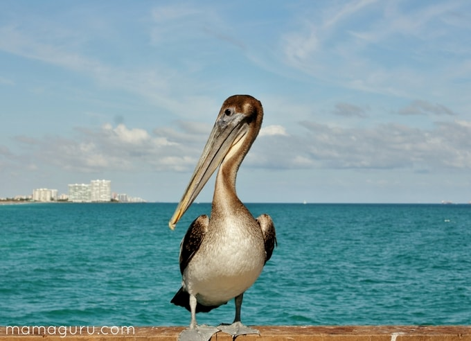 Birdwatching: A Beautiful Way to Practice Mindfulness, pelican