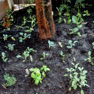 Garden Diary: Planting