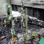 Garden Diary, Week 2: The Carnage Begins