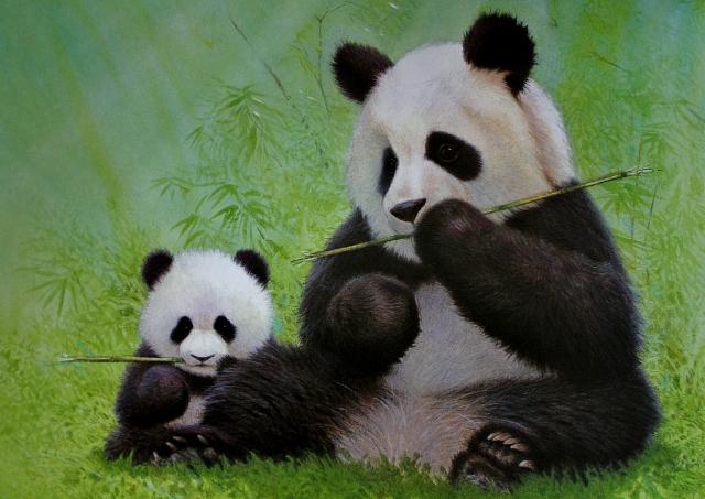 Facts About Pandas http://mamaguru.com/book-review-pi-shu-the-little ...