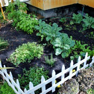 Garden Diary 2013