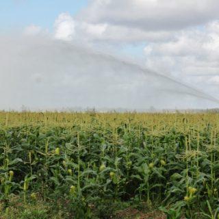 Obama's Monsanto Legacy