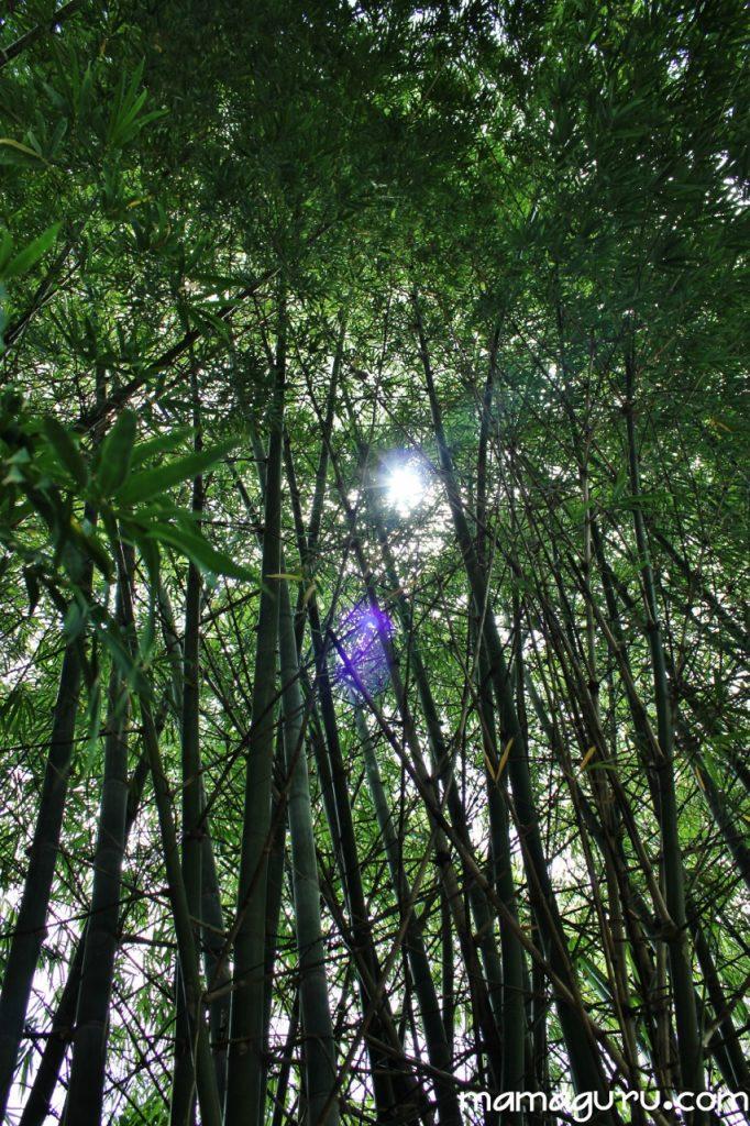 bamboo2 (853x1280)
