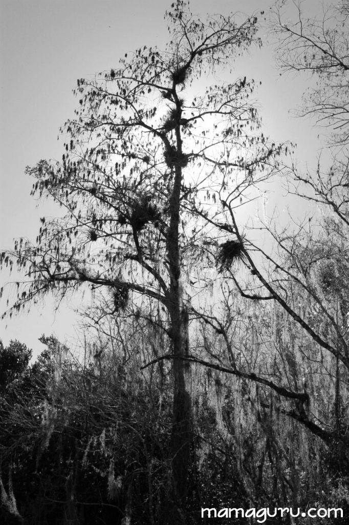 everglades 091 (853x1280)