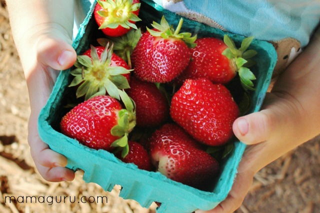 Visit a strawberry farm and kids pick strawberries