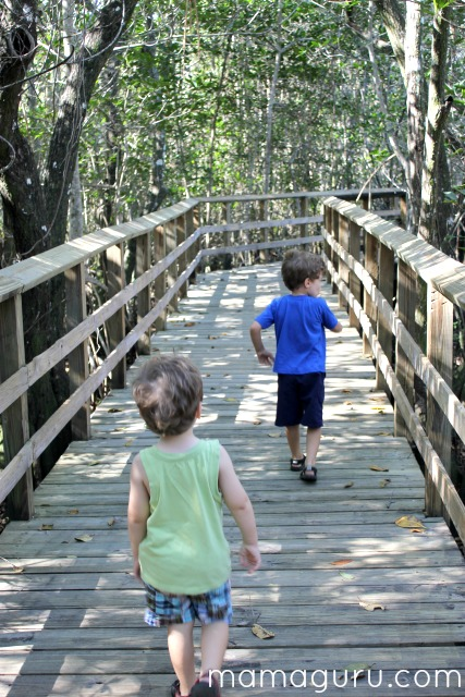 2 boys walk in mangroves on a nature hike in florida
