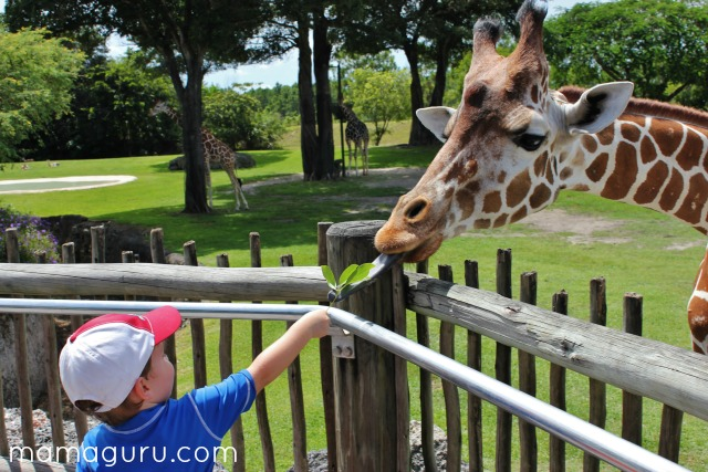 A child feeds a giraffe a leaf at the zoo.