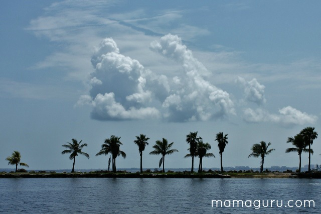 A line of palm trees surrounded by blue water and blue sky at Matheson Hammock in Miami.